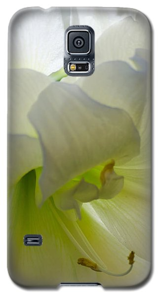 Winter White Amaryllis Galaxy S5 Case