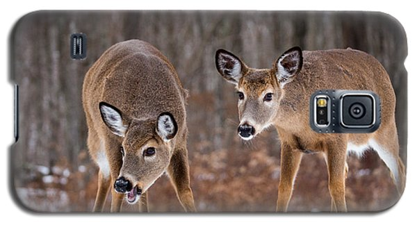 Winter White Tail Deer Galaxy S5 Case