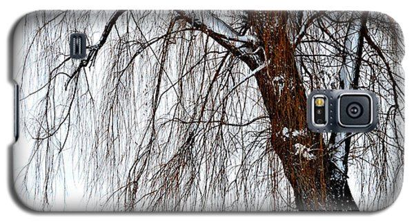 Winter Willow Galaxy S5 Case