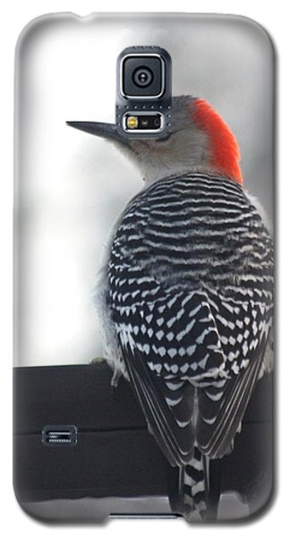 Galaxy S5 Case featuring the photograph Winter Woodpecker by Diane Merkle