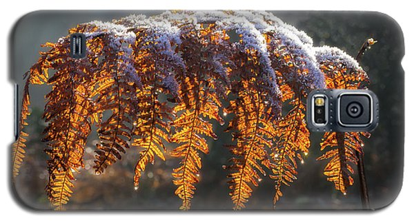 Winter Woods Galaxy S5 Case by Shirley Mitchell