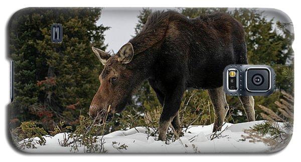 Wintering Moose Galaxy S5 Case