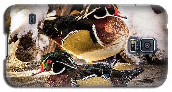 Wintering Wood Ducks Galaxy S5 Case