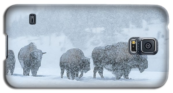 Bison Galaxy S5 Case - Winter's Burden by Sandra Bronstein