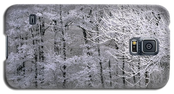 Winter's Down Galaxy S5 Case
