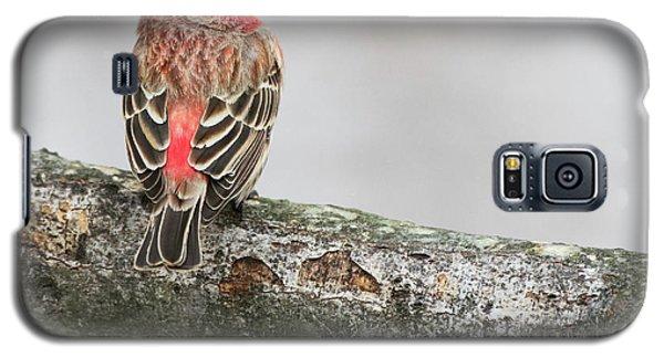 Winter Glance Galaxy S5 Case