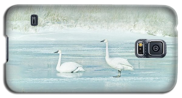 Galaxy S5 Case featuring the photograph Trumpeter Swan's Winter Rest Blue by Jennie Marie Schell