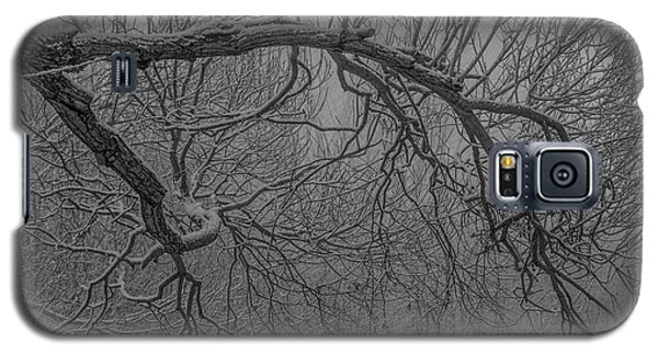 Wintery Tree Galaxy S5 Case