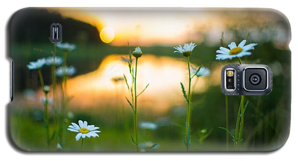 Wisconsin Daisies At Sunset Galaxy S5 Case