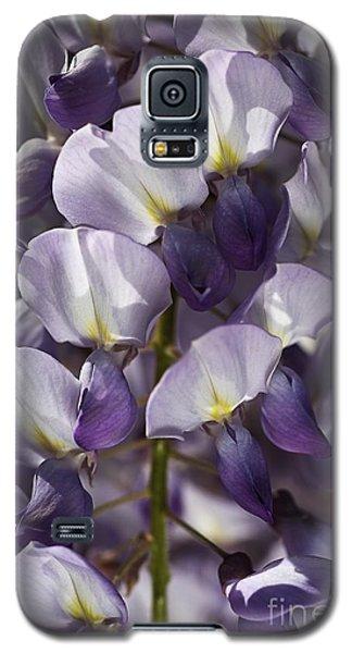 Wisteria In Spring Galaxy S5 Case