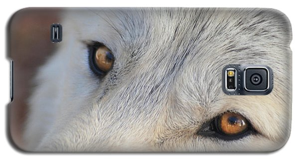Galaxy S5 Case featuring the photograph Wolf Eyes by Carolyn Dalessandro