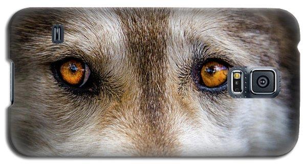 Wolf Eyes Galaxy S5 Case