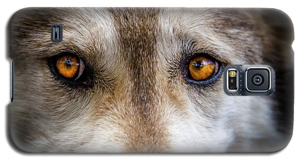 Galaxy S5 Case featuring the photograph Wolf Eyes by Teri Virbickis