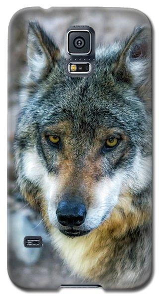 Wolf Gaze Galaxy S5 Case