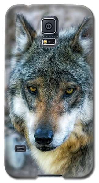 Wolf Gaze Galaxy S5 Case by Elaine Malott