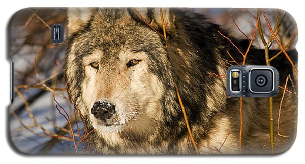 Wolf In Brush Galaxy S5 Case
