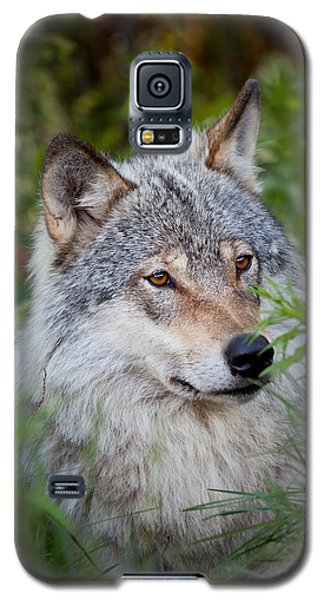 Galaxy S5 Case featuring the photograph Wolf In The Grass by Yngve Alexandersson