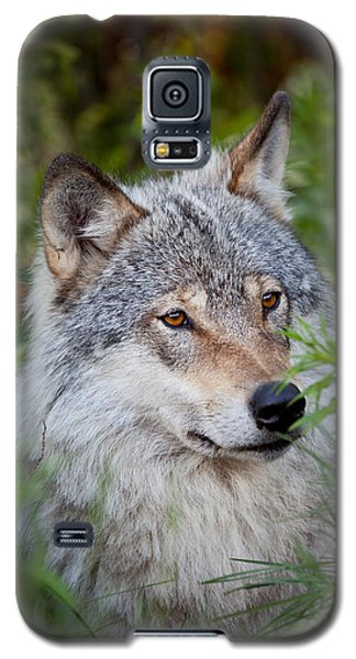 Wolf In The Grass Galaxy S5 Case