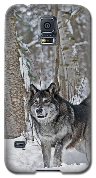 Wolf In Trees Galaxy S5 Case