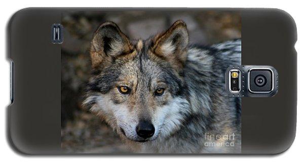 Wolf Galaxy S5 Case