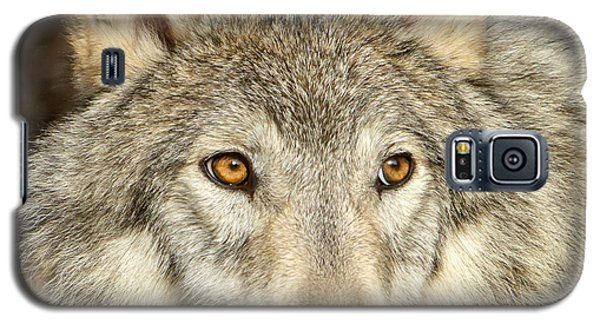 Wolf Portrait Galaxy S5 Case by Jack Bell