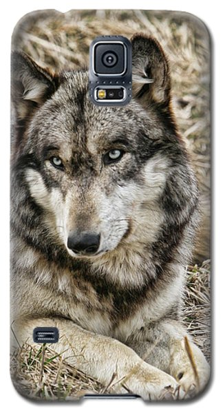Wolf Portrait Galaxy S5 Case
