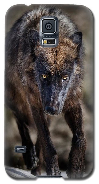 Wolf Tracking Me? Galaxy S5 Case by CR  Courson