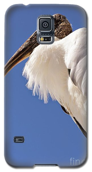 Wonderful Wood Stork Galaxy S5 Case by Carol Groenen