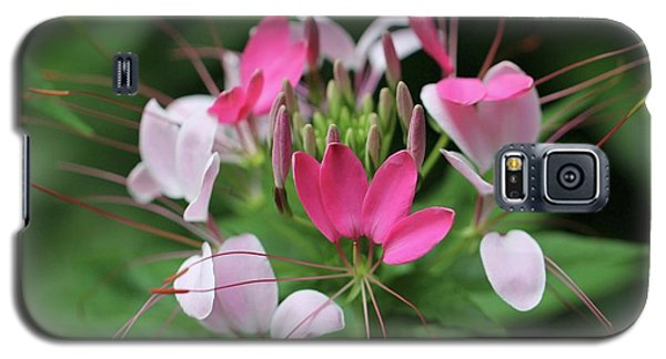 Galaxy S5 Case featuring the photograph Wonders Of Cleome by Deborah  Crew-Johnson