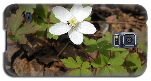 Galaxy S5 Case featuring the photograph Wood Anemone by Linda Geiger