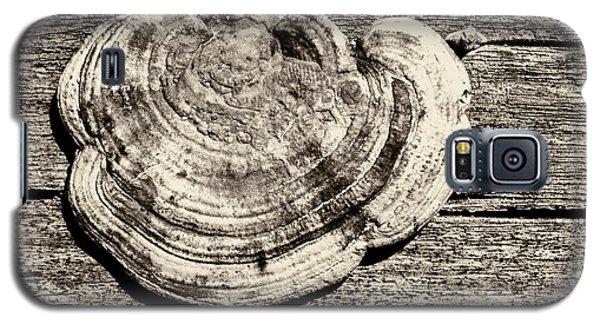 Galaxy S5 Case featuring the photograph Wood Decay Fungi, Nagzira, 2011 by Hitendra SINKAR