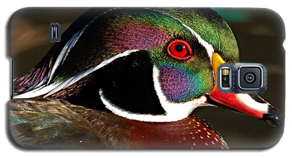 Wood Duck Courtship Colors Galaxy S5 Case by Max Allen