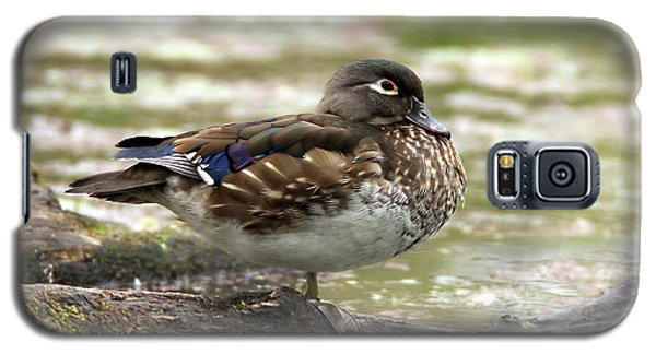 Wood Duck Hen Galaxy S5 Case
