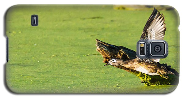 Galaxy S5 Case featuring the photograph Wood Duck Hen Takes Flight by Edward Peterson