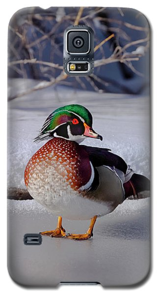 Wood Duck In Winter Snow And Ice, Montana, Usa Galaxy S5 Case