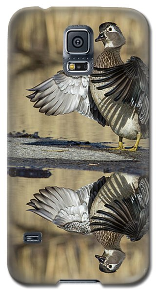 Galaxy S5 Case featuring the photograph Wood Duck Reflection by Mircea Costina Photography
