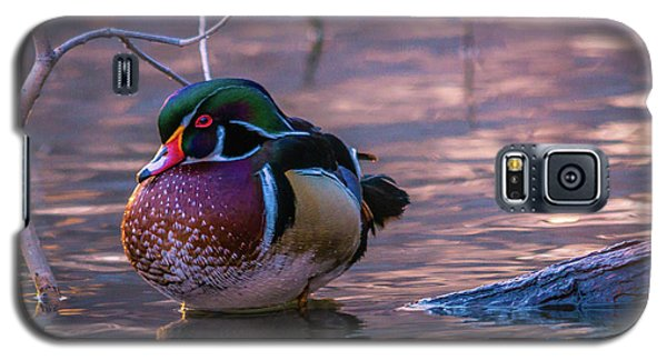 Wood Duck Resting Galaxy S5 Case