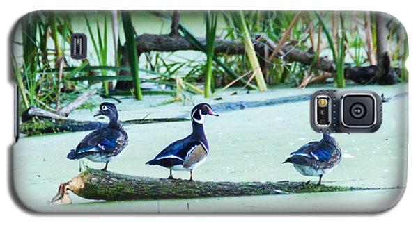 Galaxy S5 Case featuring the photograph Wood Ducks All Grown Up by Edward Peterson