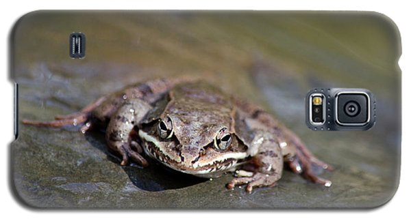 Galaxy S5 Case featuring the photograph Wood Frog Close Up by Christina Rollo