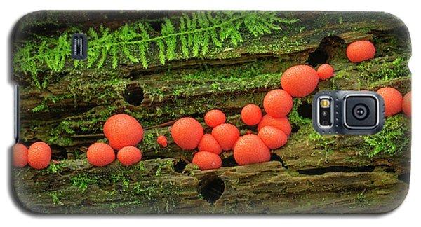 Wood Fungus Galaxy S5 Case
