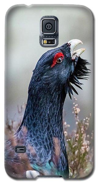 Wood Grouse Portrait Galaxy S5 Case
