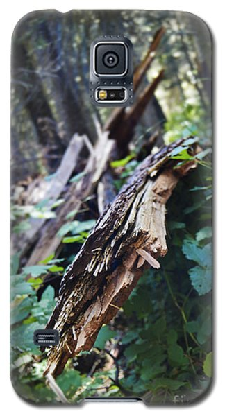 Wood In The Forest Galaxy S5 Case