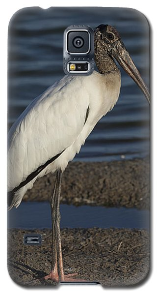 Wood Stork In The Final Light Of Day Galaxy S5 Case