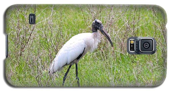 Wood Stork In The Marsh Galaxy S5 Case by Carol Groenen