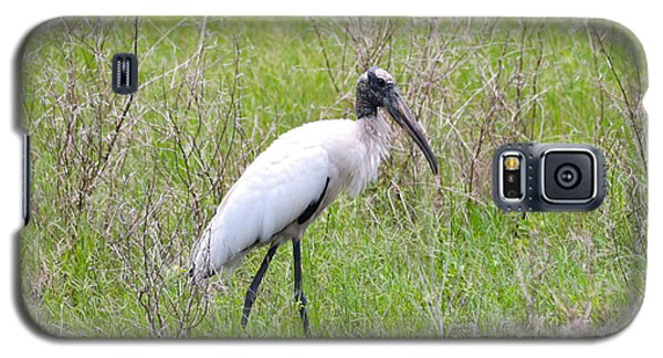 Wood Stork In The Marsh Galaxy S5 Case