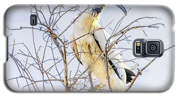 Wood Stork Sitting In A Tree Galaxy S5 Case