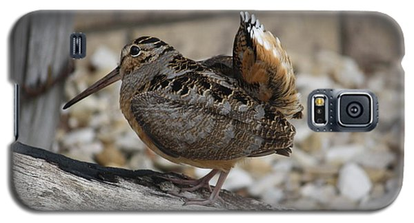Galaxy S5 Case featuring the photograph Woodcock by Donna  Smith