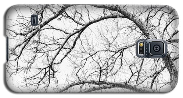 Icy Galaxy S5 Case - Wooden Arteries by Az Jackson