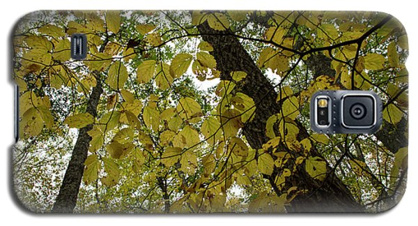 Galaxy S5 Case featuring the photograph Woodland Canopy by Andrew Pacheco
