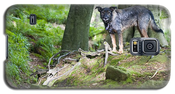 Galaxy S5 Case featuring the photograph Woodland Dog by David Isaacson